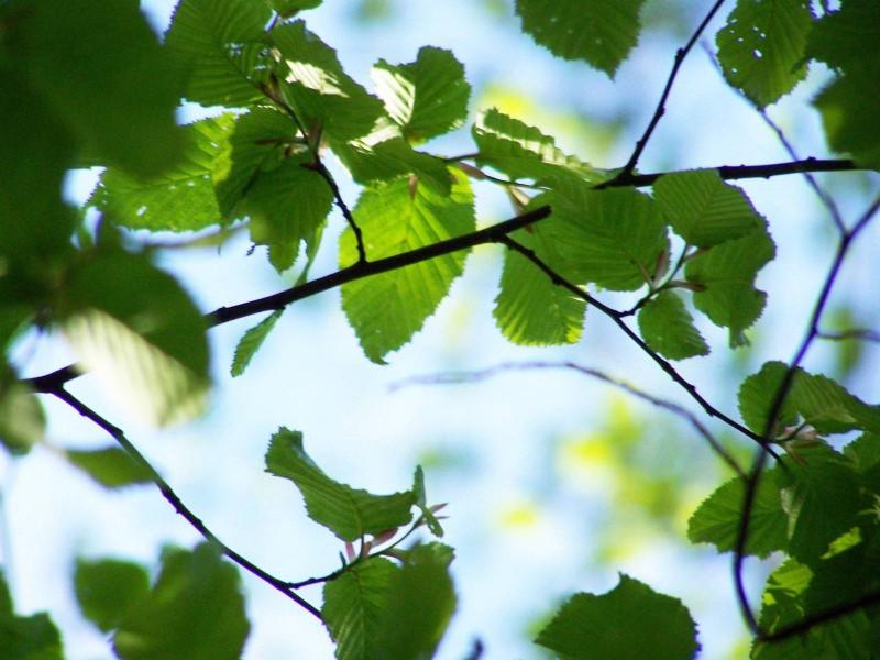 Blätterdach_Heger Holz